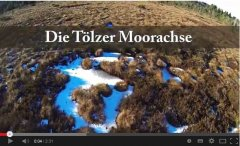 Video Moorachse